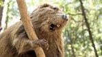 Nebýt bobrů, nevznikla by evropská civilizace