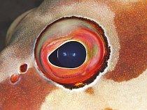 Rybí oči musí fungovat především na blízko