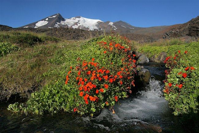 Kromě žlutých pantoflíčků zářily kolem potoka ještě nádherné červené kejklířky (Mimulus cupreus).