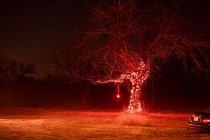 Osvětlený strom v poli u Route 290 poblíž Hye v Texasu o Vánocích roku 2016.