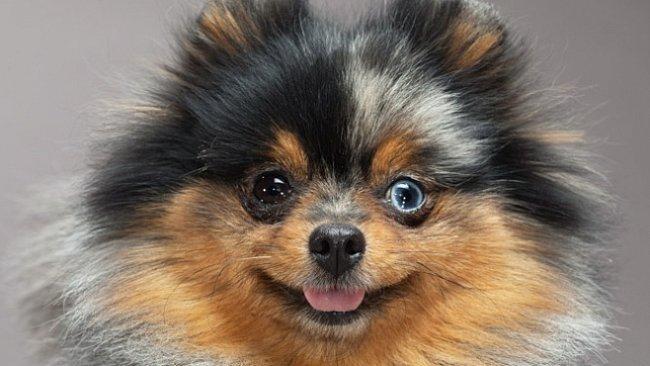 EXKLUZIVNĚ pro National Geographic: Jak vytvořit psa