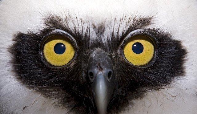 Amazonští ptáci nebyli nikdy více ohroženi než nyní, varují ornitologové
