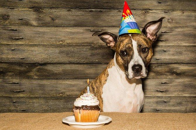 Ve srovnání s lidmi stárnou psi na počátku svého života rychleji a ke konci pomaleji.