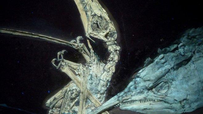 Smrtící sevření, které trvalo 120 milionů let. Pancéřovaná ryba napadla dinosaura