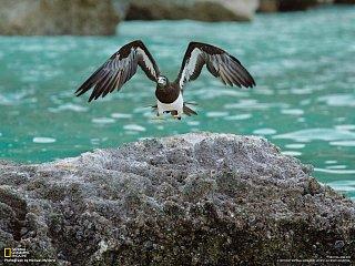 Mořský pták