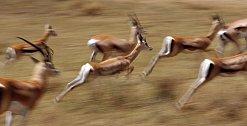 Vypravíte se do míst, kde ještě dodnes probíhá přirozená migrace kdysi nekonečných stád africké divočiny.