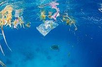 Mořské rostliny mezi plastovými obaly na hladině. Dole plave kareta obrovská a vzdaluje se od odpadků.