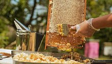 Kibuc Jad Mordechaj proslul včelařstvím.