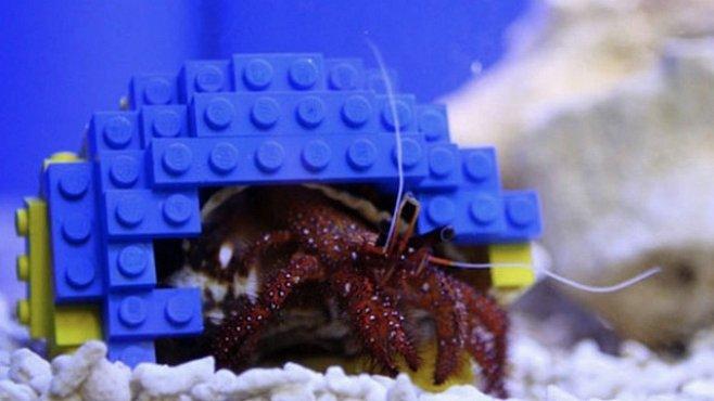 Krabi poustevníci dokáží improvizovat. Důkazem je ulita z LEGA