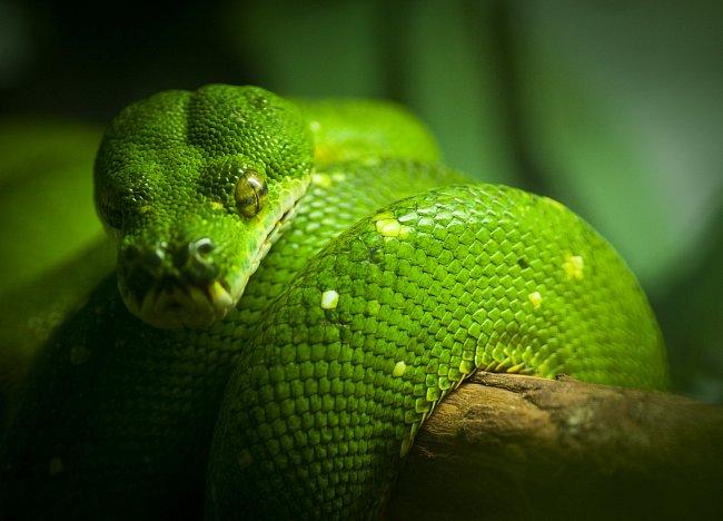 Hadí tajemství na jazyku