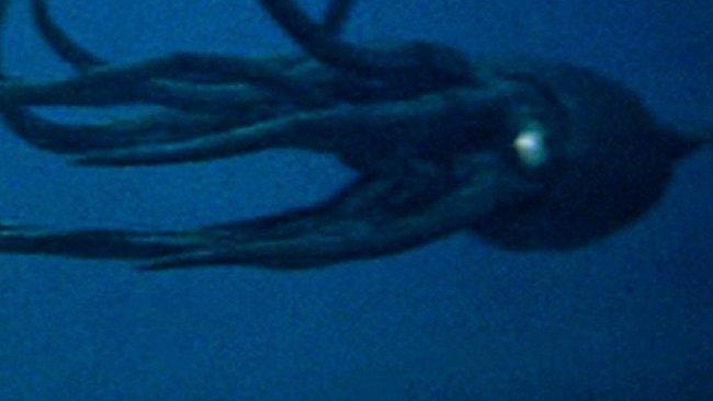 Bloop! Tak zní záhadný zvuk z hlubin oceánů. Vydává ho obří zvíře?