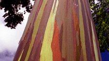 OBRAZEM: Kde rostou duhové stromy