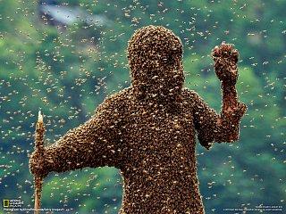 Soutěž ve shromažďování včel v Číně
