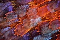 10. místo (Charles Krebs); motýlí křídla