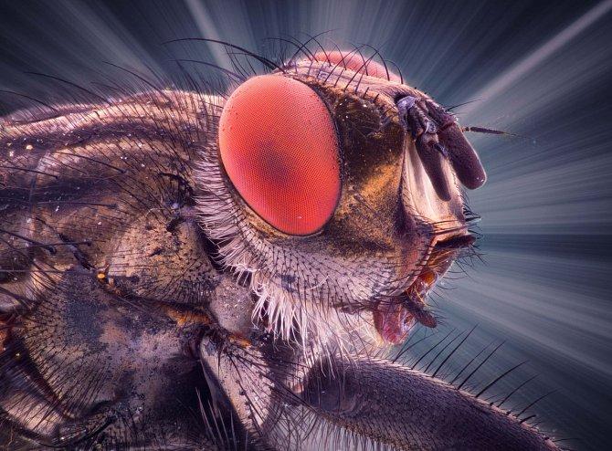 Fotograf Kutub Uddin svými snímky dokazuje, že i hmyz, včetně mouchy domácí, má svou krásnou stránku.