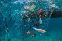 Rybáři, úřady ochrany přírody a turistické zájmové skupiny se shodly, že útesy na jedné straně ostrova Vamizi vseverním Mosambiku budou chráněny a na druhé straně ostrova bude povolen rybolov. Vrybolovné oblasti vzrůstá velikost a počet ryb.