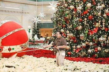 Zaměstnanec zalévá část z tisíců vánočních hvězd z rozlehlé vánoční výzdoby skleníku hotelu Bellagio v Las Vegas v Nevadě v roce 2011. Květinové sestavy vyplňují prostor v okolí vánočních symbolů.