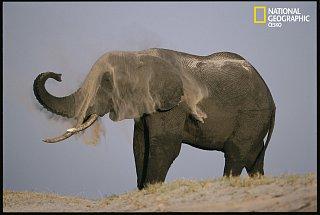 Slon se koupe. V písku