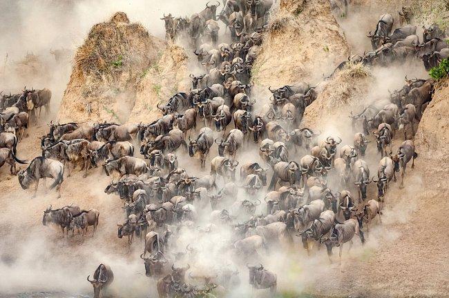 Dusot jejich kopyt víří prach. Oni však zbytečně nezpomalují. Jejich pud jim po čase dlouhých dešťů velí pokračovat dál.