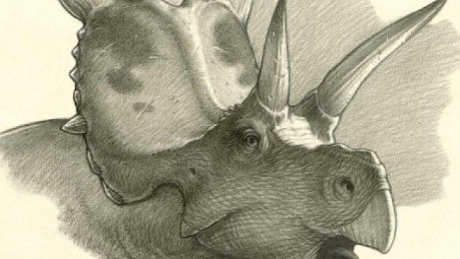 Rohatí dinosauři odhalili své další tajemství. Dosud neznámý druh