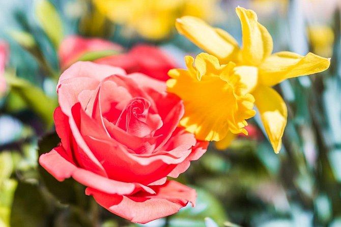 Oxid dusíku, převážně z naftových automobilů, poškozuje sloučeniny, které vytvářejí vůně květin.