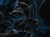 Nešťastný mravenec napadený cizopasnou houbou, housencem Ophiocordyceps. Jakmile najeho těle přistanou spory houby, proniknou skrze jeho vnější kostru adostanou se domozku. Potom mravence přinutí, aby opustil své obvyklé prostředí vpřízemním patře les
