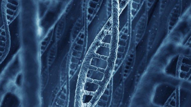 Kam povede evoluce člověka? Vyvíjí se lidstvo, nebo už jsme dospěli k vrcholu?