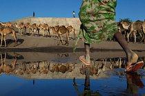 Kdekoli je voda, objeví se velbloudi ajejich pastevci. Prostor pro tradiční polokočovný život se však zmenšuje. Zeď odklánějící vEtiopii řeku Awaš je součástí projektu přeměny pouště vrozsáhlá třti