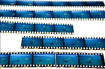 Vyvolaný film diapozitivů ukazuje okamžiky směřující k fotografii, kterou Tom Peschak označuje jako Poslední obraz žraloka a vědce.