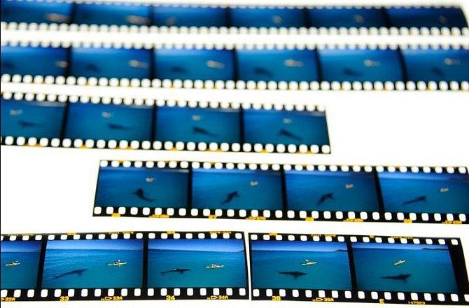 Vyvolaný film diapozitivů ukazuje okamžiky směřující kfotografii, kterou Tom Peschak označuje jako Poslední obraz žraloka a vědce.