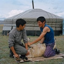 V tuvinštině khoj özeeri znamená nejen porážku zvířete, nýbrž i vlídnost, lidskost a rovněž obřad, při kterém rodina dokáže ovci zabít, stáhnout ji z kůže a tu nasolit, zpracovat maso.