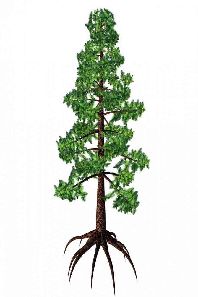 Jde ojeden znejstarších a nejvzácnějších stromů na světě.