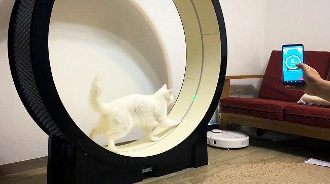 V každé kočce dřímou lovecké instinkty a LED světlo probudí k aktivitě i toho největšího lenocha.