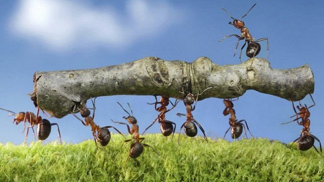 Mravenci objevili internet už před miliony roků. Lidé na to přišli až letos