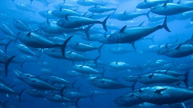 První rybáři lovili před 42 000 roky. Nebáli se plout na otevřené moře