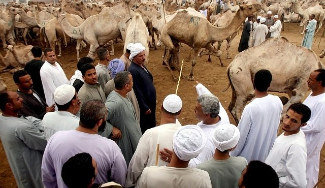 Největší velbloudí trh na světě: tisíce dromedárů na jednom místě