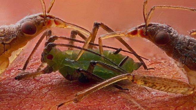 Skrytá krása parazitů – makrofotografie neviditelného světa