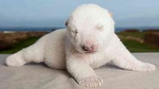 Nejkrásnější mláďata roku 2011: narodila se v zoo