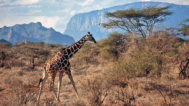 Cestujeme s National Geographic: Do Keni za Masaji, nosorožci a sopkami