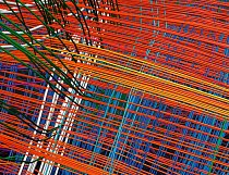 Silně zvětšený pohled na výsek předchozího snímku s vybarveným myšlením odhaluje vlákna bílé hmoty uspořádaná do tajemné mřížkovité struktury (na protější straně), která připomíná síť zeměpisných souř