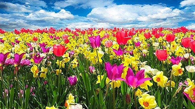 Vlast tulipánů – Kazachstán