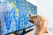 Pomalé záběry, relaxační hudba a příjemný hlas herce Davida Tennanta pomáhají psům ke zklidnění.
