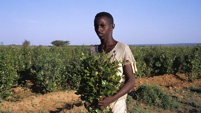 Khat – somálská droga číslo 1 rozzuřila rodiče do nepříčetnosti