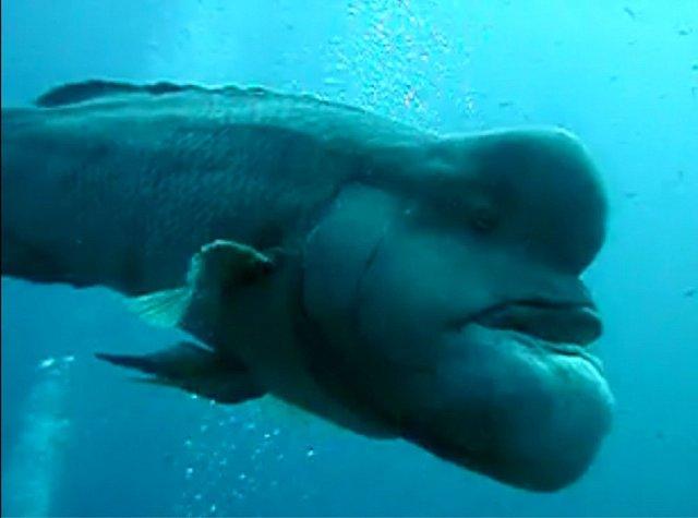Ryba patří do čeledi pyskounovitých.