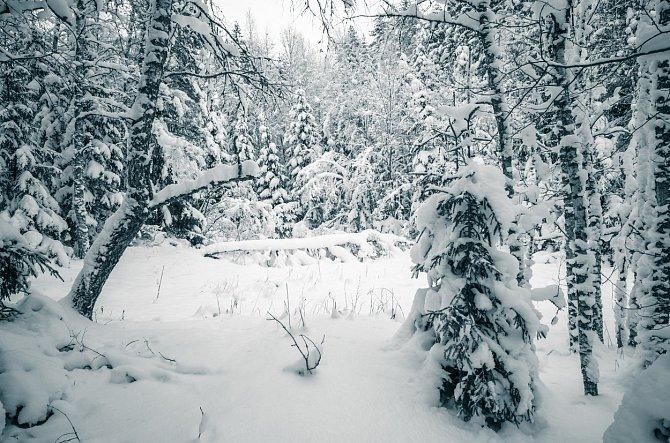 Stromeček vysoký jeden až dva metry vyjde v přepočtu na 204 Kč.