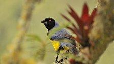 Za kolibříky, harpyjemi a bandity do pralesů Kolumbie