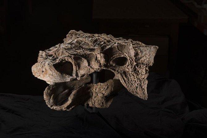 Zuul crurivastator je jedním z nejúplněji zachovalých dinosaurů, jehož pozůstatky kdy byly nalezeny. Jeho démonický vzhled inspiroval vědce, kteří ho pojmenovali podle netvora z filmu Krotitelé duchů. Jenže tento tvor nežíznil po krvi - byl býložravec.