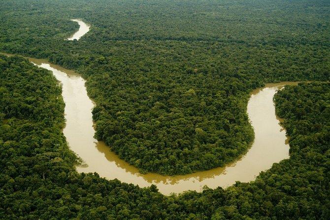 Narůstající problémy - kácení, vytrvalé deště, sucho - zvyšují zranitelnost celého ekosystému.