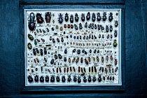 Suverénně největší sbírkou Národního muzea je sbírka entomologická. V jejich depozitářích se ukrývá hmyz z celého světa o celkovém počtu 7 milionů předmětů.
