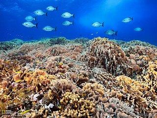 Korálové útesy